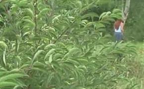 Redhead voids urine together with masturbates outdoors